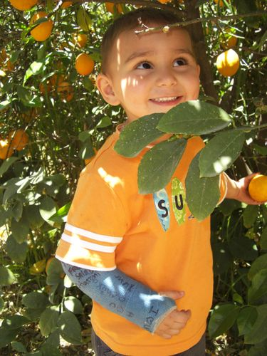 Joshua-lemons