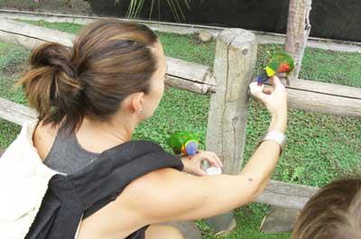 LBShelbirds