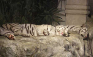 TigersII