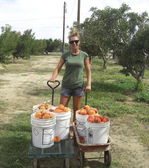 Peachespulling