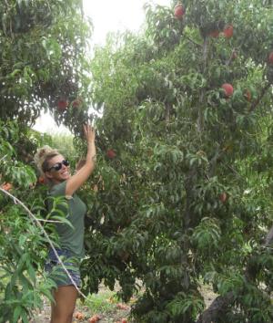 Peachespicking
